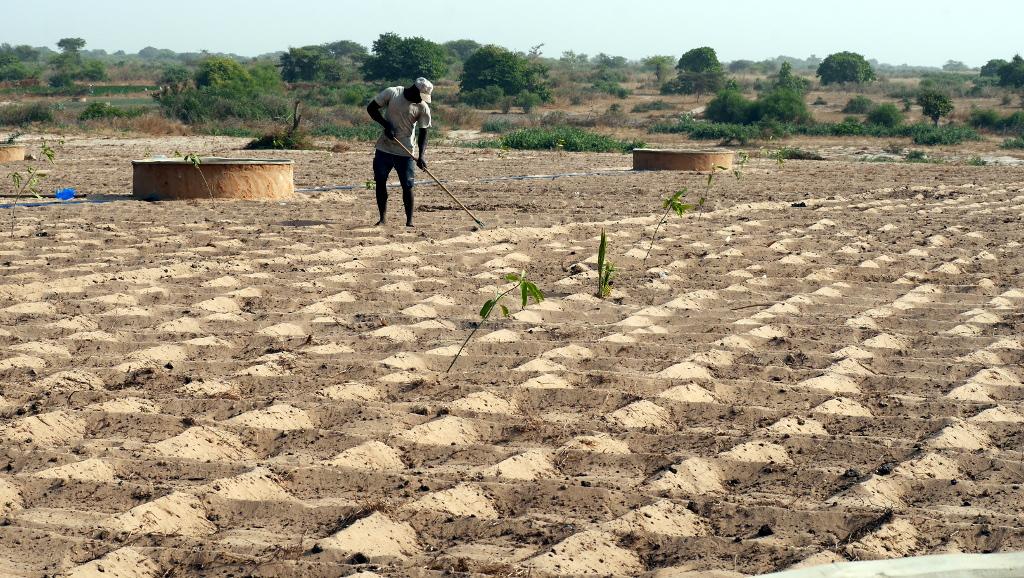 Paysan dans un champ, Senegal