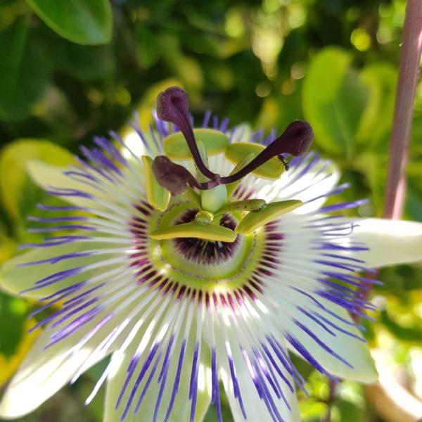 diversité de fleurs à l'Oasis des Ptis Potes