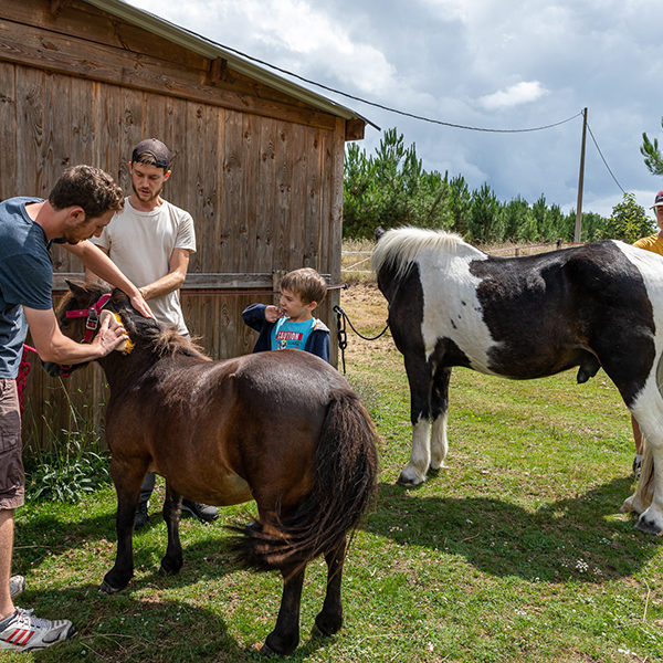 Soin des poneys pour les woofers