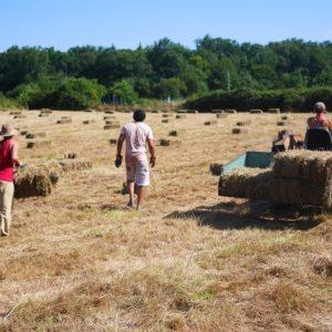 Travaux des champs à l'Oasis des Ptis Potes
