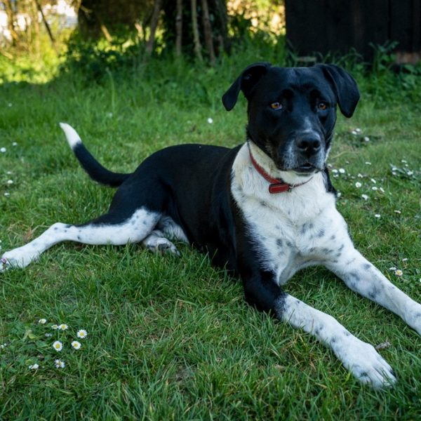 Makao, l'un des chiens de l'Oasis.
