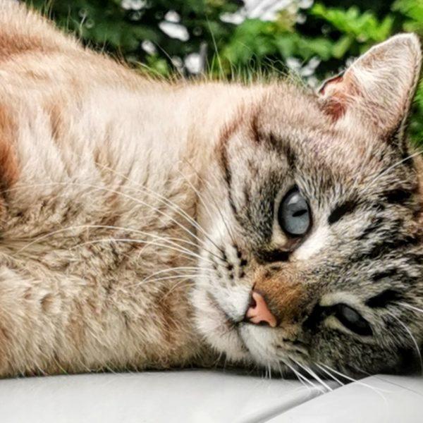 l'un des 5 chats de l'Oasis des Ptis Potes